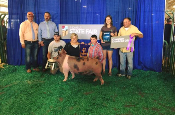 indiana state fair champ crossbred 2016_580wx380h